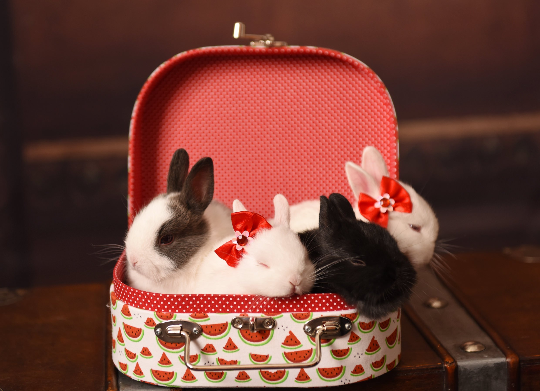 5 motivos para dar um mini coelho de presente